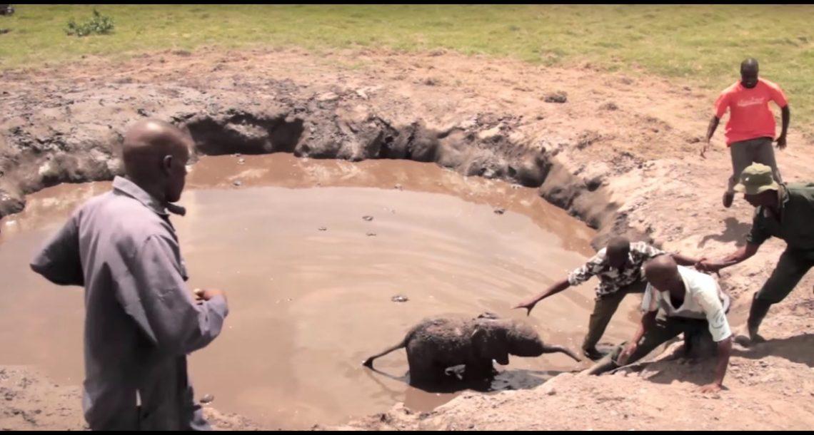 אחרי שגור הפילים חולץ ממוות וודאי, התגובה של אמא שלו הייתה פשוט מדהימה