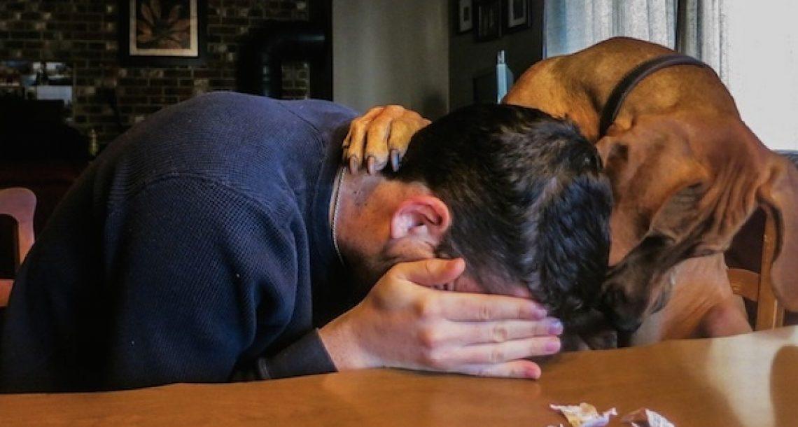 14 פעמים שחיות מחמד ידעו בדיוק איך לנחם את הבעלים שלהם