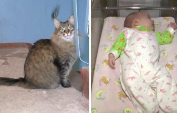 תינוקת ננטשה מתחת למדרגות של בניין – אך אז החתולה הזו שמרה עליה והצילה את חייה