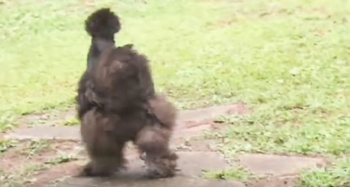 'הכלבה' שונה מכל מה שהכרתם. כשהבעלים שלה קוראת לה – זה פשוט ענק!