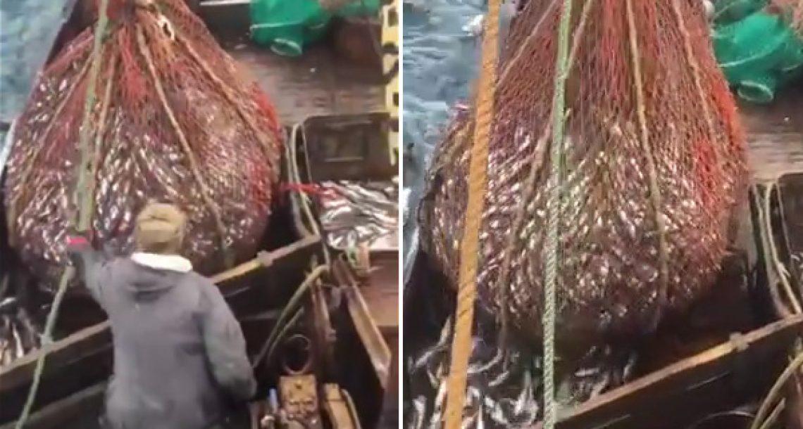 דייגים רוסים הרימו את התפיסה שלהם, אבל תמשיכו לצפות…הם לא ציפו לראות את זה
