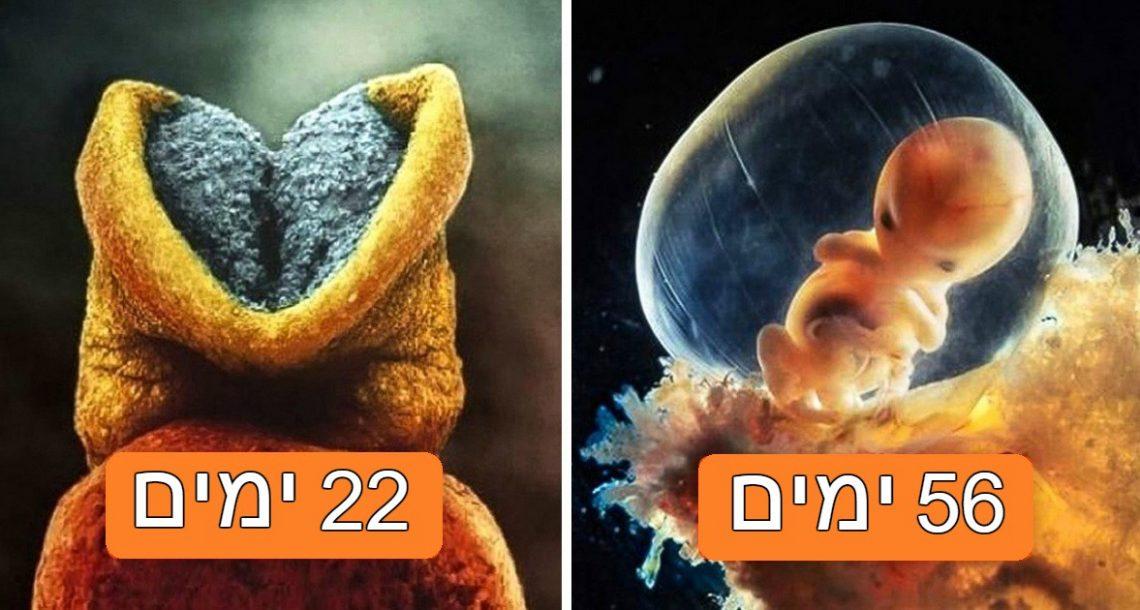איך ילד נולד: סדרת צילומים עוצרת נשימה מראה את התפתחות העובר ועד הלידה