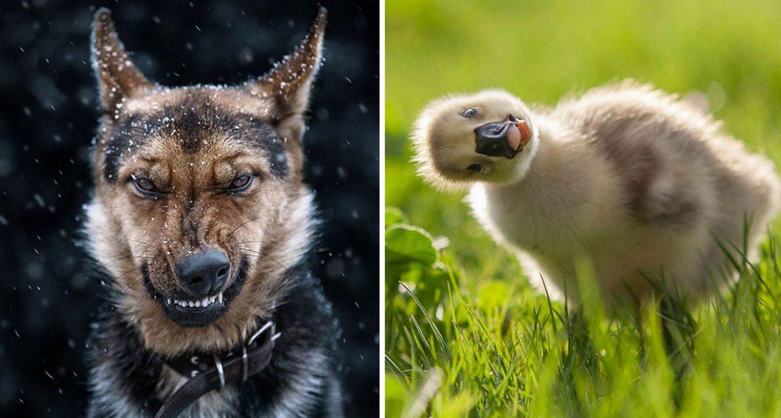21 תמונות מופלאות של כלבים, חתולים וסוסים המתעדות את הנפש של בעלי חיים