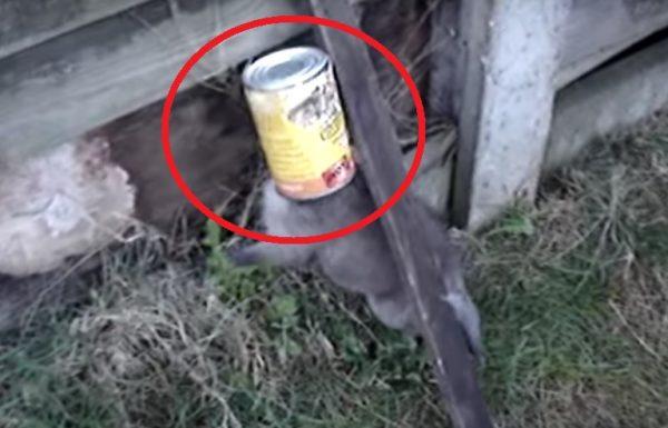הוא הציל את חייו של גור השועלים המתוק הזה. עכשיו תראו איך הוא מודה לו…