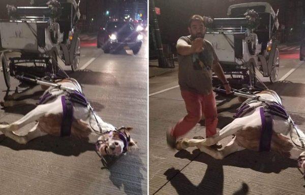 סוס התמוטט באמצע הרחוב בניו יורק – לא היה מסוגל למשוך עוד את הכרכרה אליה היה קשור
