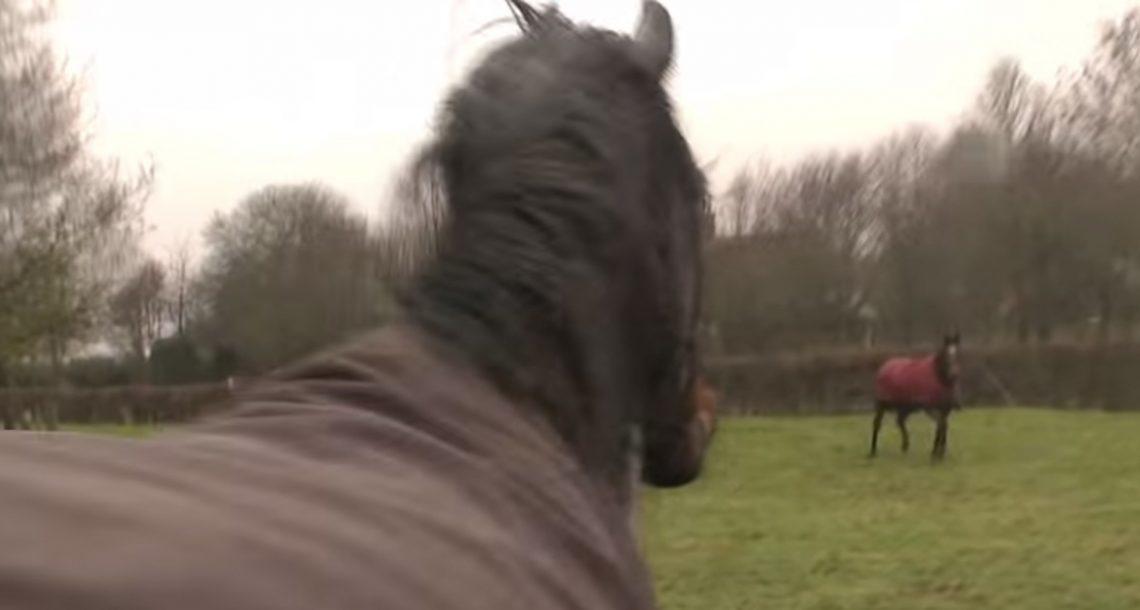 שני הסוסים העלו הופרדו למשך 4 שנים – האיחוד שלהם המיס לי את הלב