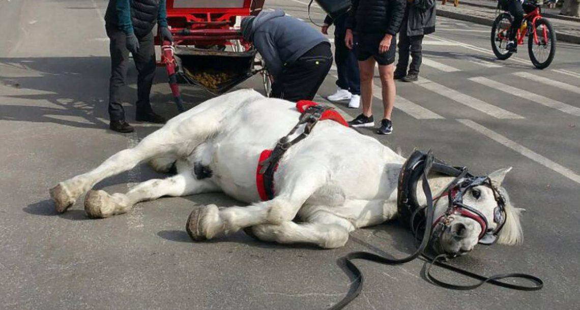 סוס התמוטט באמצע הרחוב – עכשיו פעילים למען בעלי חיים דורשים חקירה
