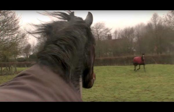 הסוס הזה חזר לחווה בה גדל. עכשיו תראו איך חברי הילדות שלו מגיבים כשהם רואים אותו שוב