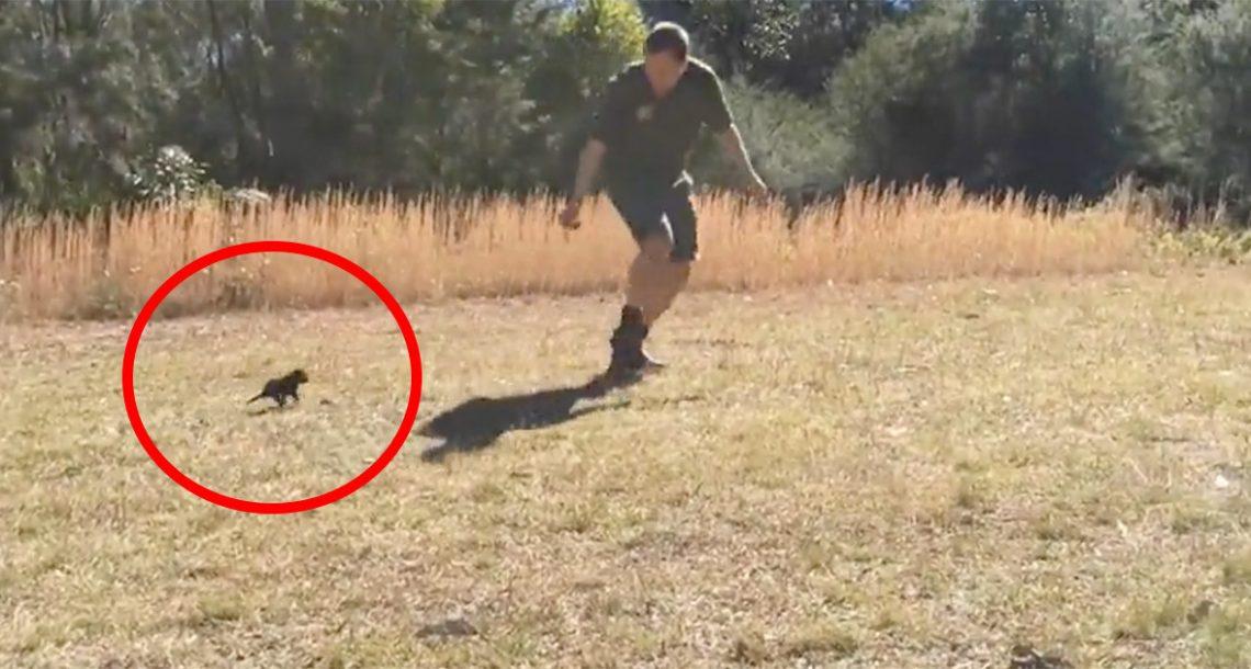 הגור הנדיר הזה התאהב במטפל שלו – המשחק שהם משחקים הוא החמוד אי פעם!
