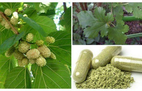 עץ שגדל בכל מקום: מטפל בגידולים, יתר לחץ דם, וסוכרת. ואף אחד לא סיפר לכם!