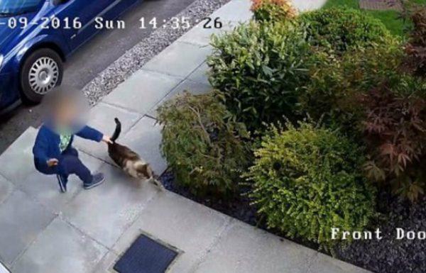 מצלמות האבטחה תעדו ילד מתעלל בחתולה של השכנים, עד שקארמה נכנסה לתמונה