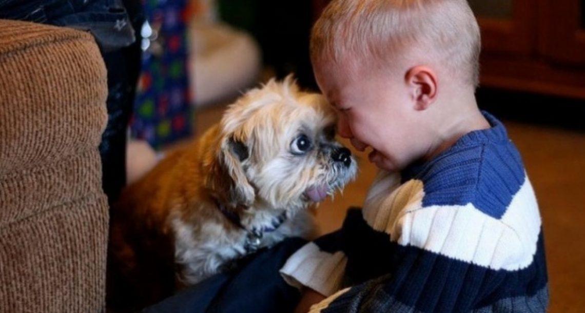 25 תמונות שמראות מדוע כל ילד צריך לגדול עם חיית מחמד