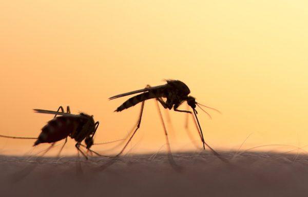 זאת הסיבה שיתושים עוקצים אנשים מסוימים, ואת אחרים לא