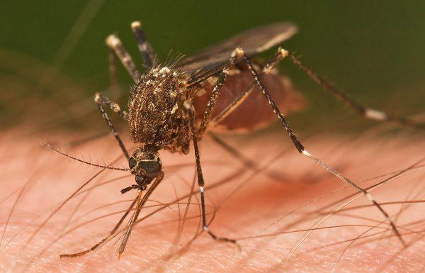 האם אתם כל הזמן נעקצים על ידי יתושים? הטריק הזה הוא הפתרון הטוב ביותר, טוענים רופאים