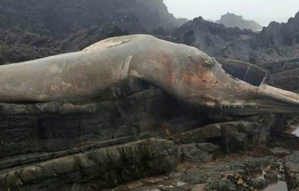 היצור הענק הזה נסחף אל החוף – והממשלה מזהירה את התושבים להתרחק ממנו