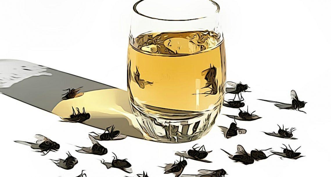 4 שיטות טבעיות וקלות שיעזרו לכם להיפטר מזבובים מעצבנים במהלך חודשי הקיץ